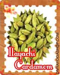 Ilayachi (cardamom) This Ilayachi is charged by Ganesha mantra. it used in Puja/worship. The benefits of cardamom could be experienced in varied components of the body...