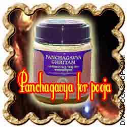 Panchagavya In Sanskrit, Panchagavya means the mix of five products obtained from cow. Panchagavya is produced from five products of the cow -- its dung, urine, milk, ghee and curd...