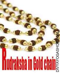 Rudraksha mala in gold chain