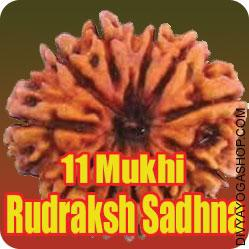 Enhance your luck with Eleven Mukhi Rudraksha Sadhana Eleven faced Rudraksha (११ मुखी रुद्राक्ष ) is the image of Indra, the lord of the gods. It has combined powers of 11 gods stored within...