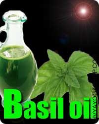 Basil oil Basil important oil embrace its skill to deal with sickness, movement illness, dyspepsia, constipation, respiratory issues...