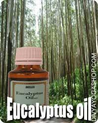 Eucalyptus oil Eucalyptus oil are nicely-recognized and broad ranging, and its components embody anti-inflammatory, antispasmodic...