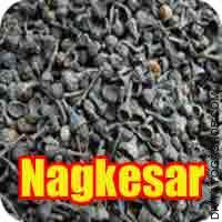 Nagkesar for puja Nagkesar is small to medium-sized evergreen tree as much as thirteen m tall, typically buttressed on the base with a trunk..