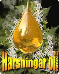 Harshingar oil Harsingar has been extensively used as a therapy for arthritis and backache in Indian Ayurveda for hundreds of years...
