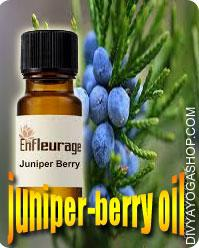Juniper berry oil Juniper Important Oil will be attributed to its components as an sterile, sudorific, antirheumatic, depurative...