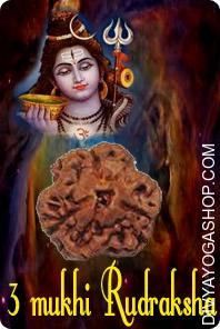 Three mukhi java rudraksha Three Mukhi Rudraksha is the symbol of Three Deva i.e. (Brahma, Vishnu and Mahesha). The one that wears this Rudraksha after correct Sidhhi ( methodology of purification & charging with Mantra) will always get the blessings of three powers and accompanied by three Deva...