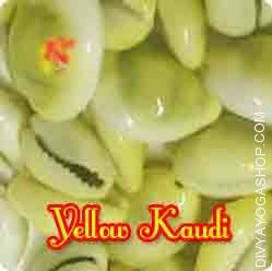 yellow-kaudi.jpg