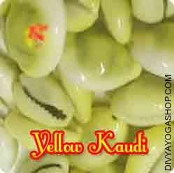 Yellow Kaudi for wealth This Yellow Kaudi (Yellow shell) charged by Lakshmi-Narayana mantra. Yellow Kaudi (Yellow shell) is of great significance within the worship of Goddess Mahalakshmi and Lord Vishnu...