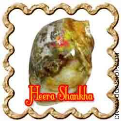Heera Shankha for wealth This Heera Shankha is charged by Ashta-lakshmi mantra. This can be a fossilized right aspect conch. The average life of it's is 10000 years or more...