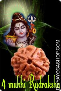 Four mukhi nepali rudraksha This Four Mukhi Rudraksha charged by Bramha mantra. The four face Rudraksha blesses wearer with creativity , communication skills and internal meditation...