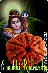 Six mukhi nepali rudraksha This Six Mukhi Rudraksha charged by Kartikeya mantra. Six Face Rudraksha helps to build and increases emotional character. These character like Love ,Kindness , Attraction And so on will be good and powerful....