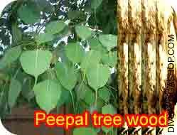 Peepal tree wood for havan
