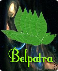 Belpatra for worship of Shiva This Belpatra charged by Shiva mantra.The significance of offering Belpatra and Samipatra on the lingam has been mentioned in the historical scriptures...