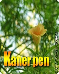 Kaner wooden pen for writing yantra