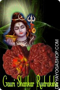Gauri-shankar nepali rudraksha Good for bringing concord in all kind of relationship weather family relationship or relationship across the buddy and folks in society or working places. Peace and pleasure of family are tremendously increased....