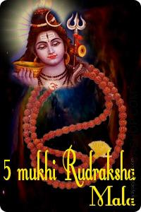Five mukhi rudraksha mala This Rudraksha Mala energised by lord shiva mantra. The person who wears Rudraksha brad or mala (rosary) at all times possesses good health, revered by all and is capable of attracting everybody and can get required results...