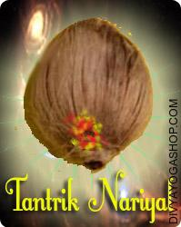 Tantrokta Nariyal This Tantrokta Nariyal has been energised by Panchamukhi Ganesha mantra. It is beneficial for Puja, Tantra Puja, protection, removing negative energy, evil protection...