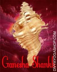 Ganesha Shankha This Ganesh Shankha charged by Ganesha-Lakshmi mantra which is beneficial for good luck, wealth, success in any task. Ganesh Shankha is among six Divine Auspicious Shankha known as Shad Shankhas.Ganesh shankh represents Lord Ganesha and is worshipped remove obstacles, for studying, for fulfilment in all undertakings, to get good luck and prosperity to family...