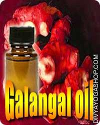 Galangal (Alpinia officinarum) oil Past frequent use as a flavoring, fragrant refreshment, carminative, and conventional use to deal with youngsters...