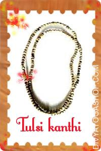 Tulsi Kanthi (Neck Mala) This Tulsi Kanthi mala  charged by Krishna mantra. Tulsi wood, which is within the family of basil, is the...
