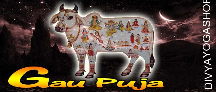 Gau Puja On this propitious goverdhan gau pooja day, gau mata puja is carried out by our tantra sadhaks following tantra based rituals..