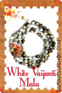 White Vaijanti mala This White Vaijanti (Rosary) Mala  charged by Shukra mantra. White Vaijanti Mala is made from White Vaijanti...