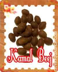 Kamal beej This Kamal Beej (Lotus seeds) is charged by Mahalakshmi mantra. The Goddess Mahalakshmi is easily appeased if one uses this Kamal Beej...