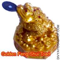 Golden Feng Shui Toad