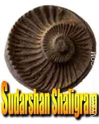 Sudarshan Shaligram