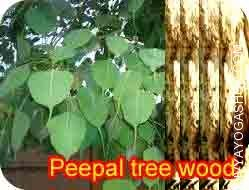 peepal-tree-wood-for-havan.jpg