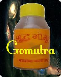 Gomutra for worship
