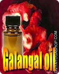 Galangal (Alpinia officinarum) oil